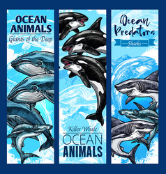 Shark and whale sea predatory animal banner set vector