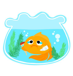 goldfish injury in the bowl vector image