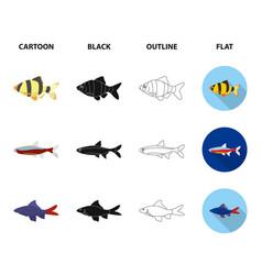 angelfish common barbus neonfish set vector image