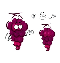 Bunch of fresh ripe purple grapes vector image
