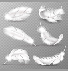realistic white feathers birds plumage falling vector image