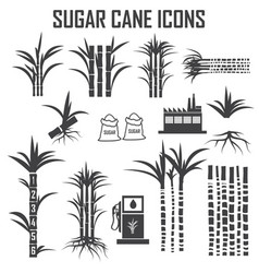 sugar cane icons vector image