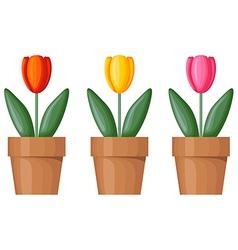 pot tulips vector image vector image