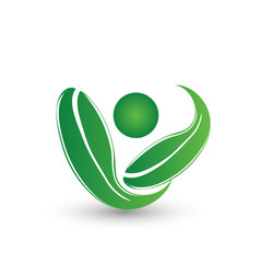 organic and fresh leafs symbol vector image