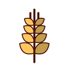 Spike wheat isolated icon vector