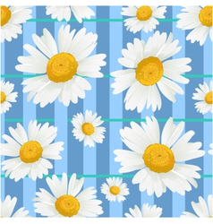 Floral seamless background with white chamomiles vector image vector image