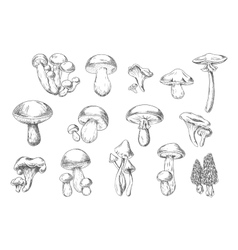 Edible and poisonous wild mushrooms sketch style vector image