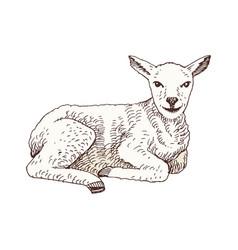 hand drawn lamb vector image
