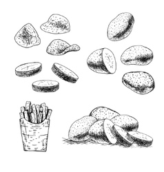 Hand drawn set of potato sketch vector