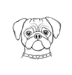 head dog pug hand-painted portrait black and vector image