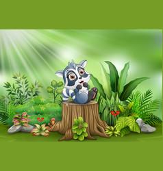 cartoon happy raccoon on tree stump with green pla vector image