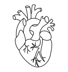 flat style linear heart vector image