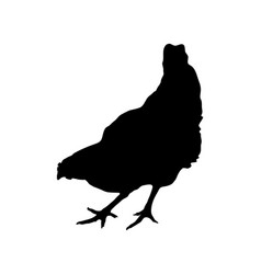 Silhouette of a hen on white background vector