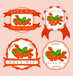The theme rose hip vector