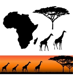 Africa and Safari elements vector image