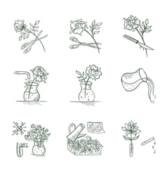 Floristic Icons vector