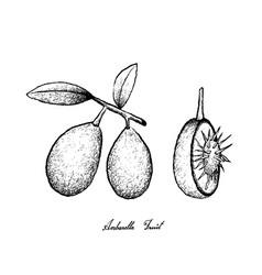 Hand drawn of ambarella fruits on white background vector