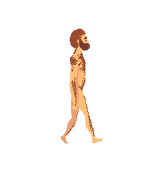 male neanderthal biology human evolution stage vector image