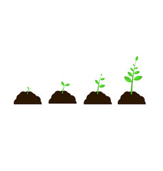 plant grow stages seed growth speed vector image