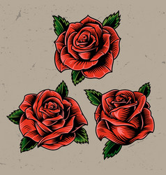 vintage red blooming roses concept vector image