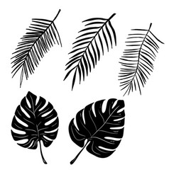 Set of hand drawn palm leaves isolated on white vector