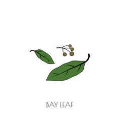 Spice bay leaf icon vector