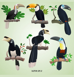A set of realistic toucans and hornbills on branch vector