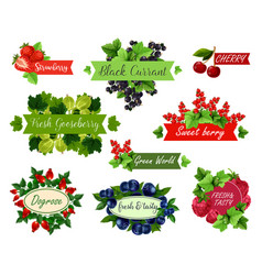 Berry and fruit label set for food drink design vector