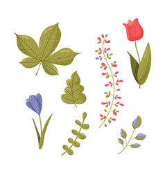 Spring set collection floristic flowers and vector