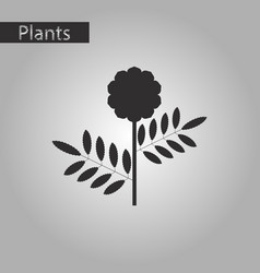 Black and white style icon of plant tagetes vector