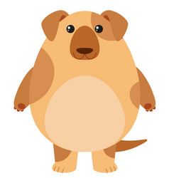 brown dog on white background vector image