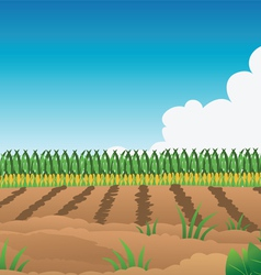Crop field corn vector