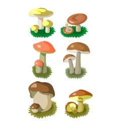 Mushrooms set 002 vector