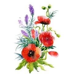 Watercolor Summer Garden Blooming Poppies Flower vector image vector image