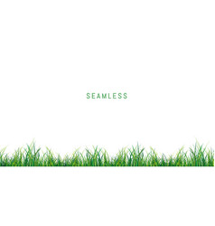 seamless fresh green grass on white background vector image