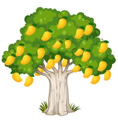 Yellow mango tree isolated on white background vector