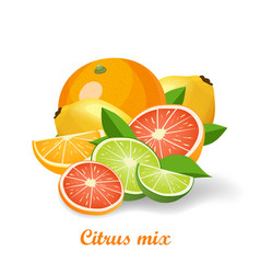fresh citrus fruits isolated vector image