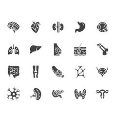 Organs anatomy flat glyph icons set human bones vector