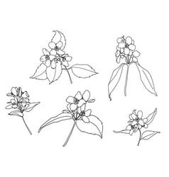 Set jasmine outline flowers vector