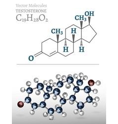 testosterone molecule image vector image