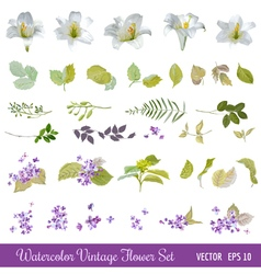 Vintage Flower Set - Watercolor Style vector image