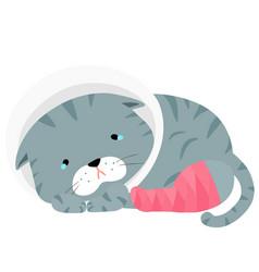gray cat injury splinting leg vector image