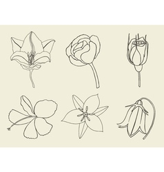 Hand drawn sketch flowers vector image vector image