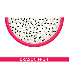 Dragon fruit isolated on white vector