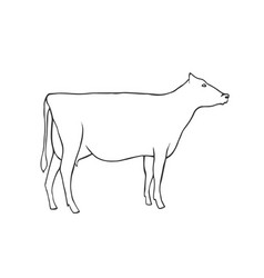 Hand draw cow vector