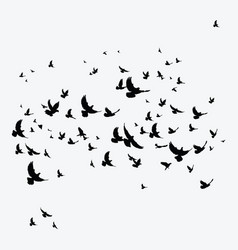 Silhouette of a flock of birds black contours of vector
