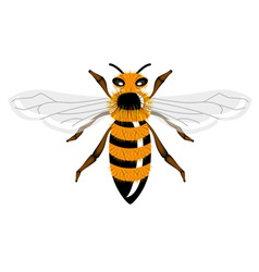 vector insect bee vector image