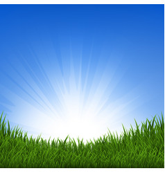 grass and sunbeam vector image vector image