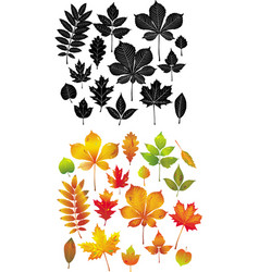 set of autumn leaves collection vector image vector image