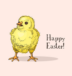 hand drawn easter gift card with little chick vector image